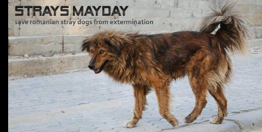 Strays Mayday