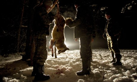 Carnivore extermination