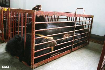 bear bile farming AAF