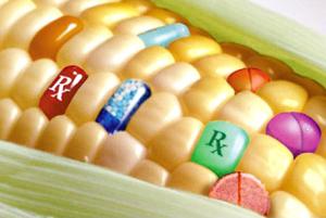 GMO corn is no longer allowed in Mexico.