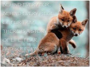 behind every fur