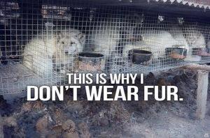 why I don't wear fur