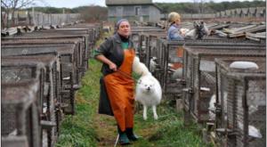 Fur farm in Brazil
