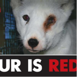fur is red
