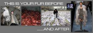 fur before and after